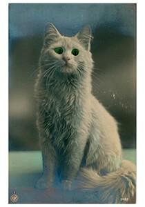 A.N.B. -Kat met groene ogen- Postcard