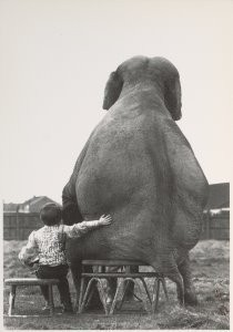 Mike Hollist -My pal the elephant- Postcard