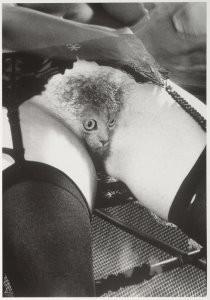 J.K.Potter -Pussy- Postcard