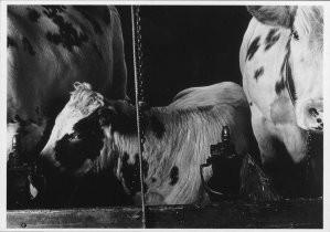 Willem Diepraam (1944) -Friesland- Postcard