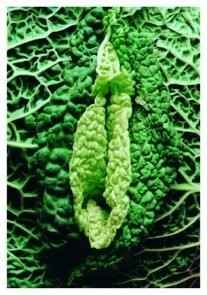 Brosschot & Tjernikov -Green Cabb- Postcard