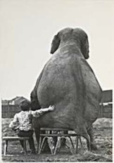 Mike Hollist -Hollist / My pal the eleph/WPP- Notecard