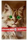 Anonymous  -  Kat met groene ogen - Postcard -  1C2215-1