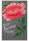 A.N.B.  -  Best birthday wishes - Postcard -  1C2480-1