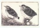 Chris le Roy (1884-1969)  -  Jonge lijsters - Postcard -  A10259-1