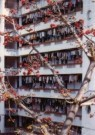 Gerald van der Kaap (1959)  -  Xiada (fruit tree), Xiamen, 2002 - Postcard -  A10301-1