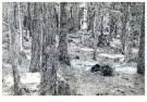 Jimi Dams (1963)  -  Im Walde - Postcard -  A11504-1