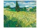 Vincent van Gogh (1853-1890)  -  Green Field, 1889 - Postcard -  A117246-1