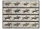 Eadward Muybridge(1830-1904)  -  Horse In Motion - Postcard -  A14212-1