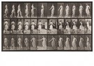 Eadward Muybridge(1830-1904)  -  Animal Locomotion, Plate 53 - Postcard -  A14234-1