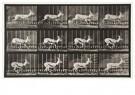 Eadward Muybridge(1830-1904)  -  Antelope Trotting, Plate 698 - Postcard -  A14239-1