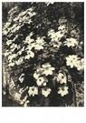Eugène Atget (1857-1927)  -  Coin De La Rue Des Rosiers Et Du Vieille-Du-Temple (4E Arr) - Postcard -  A24173-1