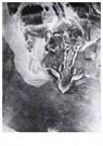 Laszlo Moholy-Nagy (1895-1946) -  Cat Negative - Postcard -  A25010-1