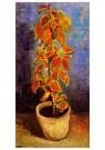 Vincent van Gogh (1853-1890)  -  Flame Nettle in a Flowerpot, 1886 - Postcard -  A41813-1