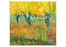 Vincent van Gogh (1853-1890)  -  Knotwilgen,zon - Postcard -  A6526-1