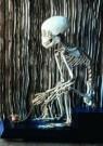 Anoniem  -  Skelet aapje - Postcard -  A7547-1