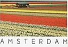 Ricardo Murad  -  Tulip Fields - Postcard -  AU0643-1