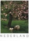 Igno Cuypers  -  Springtime - Postcard -  AU0685-1