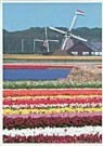 Igno Cuypers  -  United Colors of Holland - Postcard -  AU0813-1