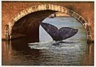 Tim Killiam (1947-2014)  -  Vistory, Surprising Holland - Postcard -  AU1002-1