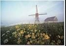 Aad Schenk  -  Windmills in the Haze, Holland - Postcard -  AU1022-1
