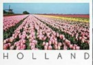 Henk van der Leeden (1941)  -  Rose, Yellow & Red tulip fields in Holland - Postcard -  AU1026-1