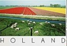 Henk van der Leeden (1941)  -  Sheep & Tulips - Postcard -  AU1041-1
