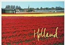 Aad Schenk  -  Red Tulips, Holland - Postcard -  AU1042-1
