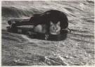 Hilde Vaatstra (1947)  -  Doos van Pandora - Postcard -  B0319-1