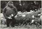 Leigh Henningham  -  Melbourne's Mzuri - Postcard -  B0796-1