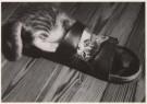 Norbert Eick  -  Zino II - Postcard -  B0977-1