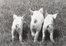 Nancy G. Horton  -  Three Little Pigs - Postcard -  B2325-1