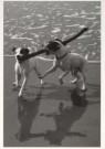 Loes Schleedoorn  -  Ik wou dat ik twee hondjes was... - Postcard -  B2466-1