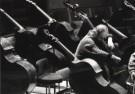 Marco Borggreve (1965)  -  Radio Philharmonisch Orkest  1 - Postcard -  B2662-1