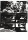 Eva Besnyo  (1910-2003)  -  In het park, Budapest - Postcard -  B2993-1