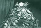 Anoniem,  -  Indische vruchten 1879 - Postcard -  B3006-1