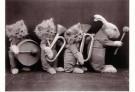Spaarnestad Fotoarchief,  -  Dierenorkest - Postcard -  B3230-1