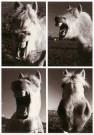 Agnes van der Lei  -  Het lachende paard - Postcard -  B3242-1