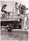 Spaarnestad Fotoarchief,  -  Fotograaf valt van duikplank - Postcard -  B3249-1