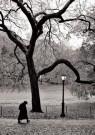 Ronald Arthur van Schaik (1956 -  R.A. Van Schaik/Central Park - Postcard -  B3496-1