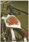 Tjalf Sparnaay (1954)  -  Tulpen uit Amsterdam - Postcard -  C0636-1