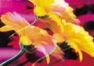 Jeanet van der Meer (1958)  -  Flower paradise - Postcard -  C10040-1
