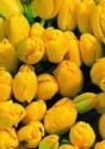 Paul Huf (1924-2002)  -  Flowerpower no.25 - Postcard -  C1030-1