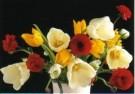 Marianne Cornelissen-Kuyt  -  Indoor Spring Garden - Postcard -  C10371-1