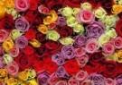 Paul Huf (1924-2002)  -  Flowerpower no. 29 - Postcard -  C1057-1