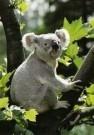 Ron Entius  -  Australian nature - Postcard -  C11213-1