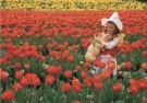 Coquille  -  Love among the tulips, 2008 - Postcard -  C11465-1