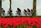 Henk P. Drost  -  Tour de tulipe, 2008 - Postcard -  C11562-1