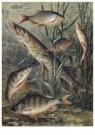 Cornelis Jetses (1873-1955)  -  Schoolplaat van planten en dieren - Postcard -  C11573-1
