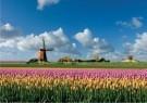 Jaap Hart  -  Lente in Holland - Postcard -  C11815-1